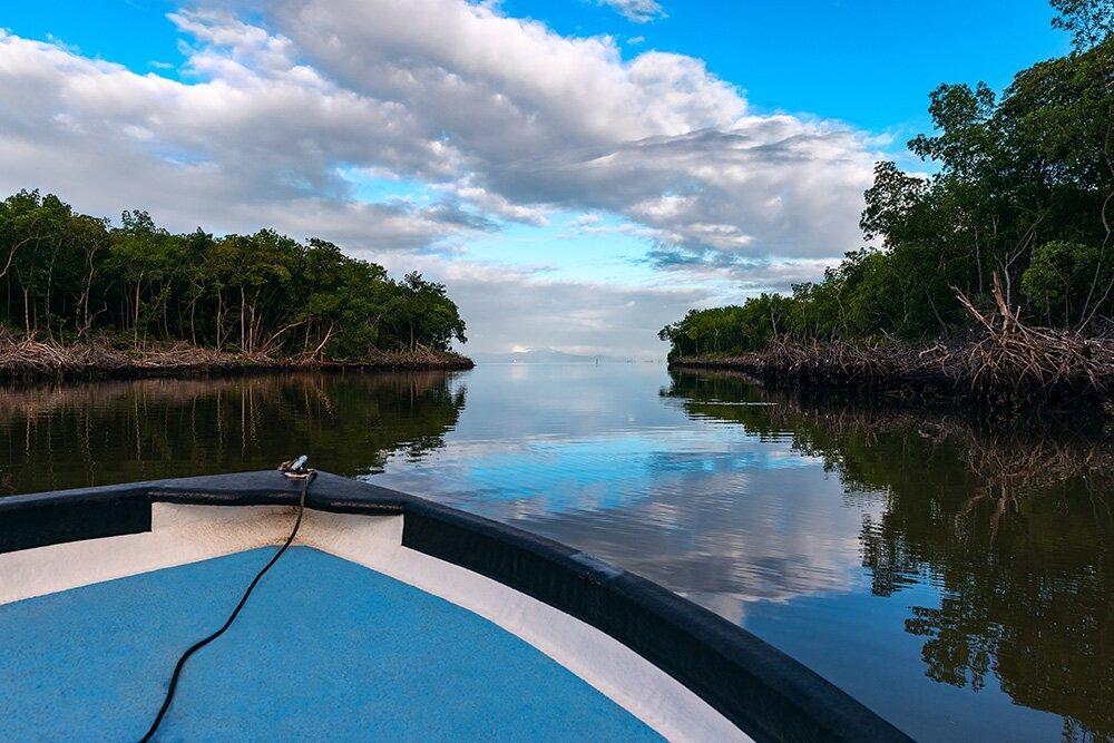 Заросли мангров в Птичьем заповеднике «Карони» (Тринидад)