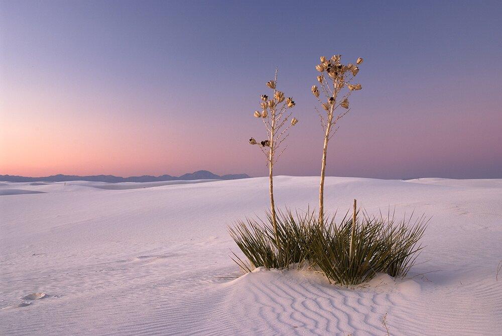 Рассвет в Национальном памятнике «Белые пески» (Нью-Мексико, США)